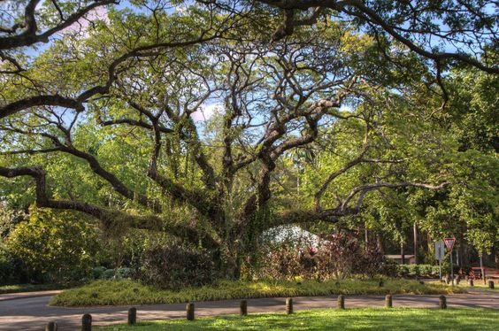 darwin-botanicgardens