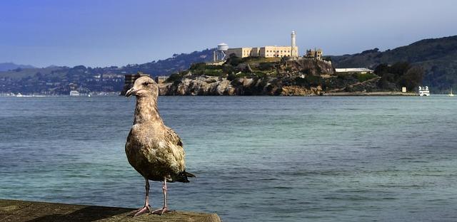Galleria foto - San Francisco visita ad Alcatraz Foto 5