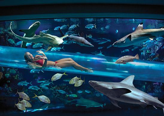 Uno scivolo che attraversa gli squali a Las Vegas