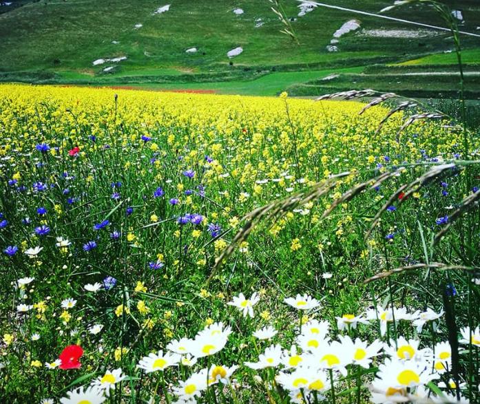 Galleria foto - Castelluccio di Norcia altitudine, come arrivare e cosa fare Foto 4