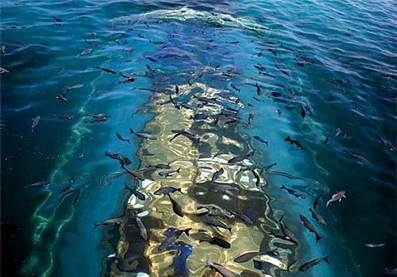 ristorante-particolari-maldive