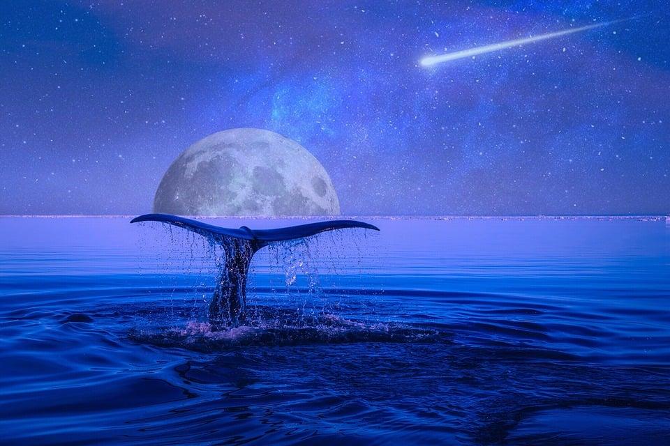 Orionidi: Quando vedere le Stelle Cadenti in Autunno